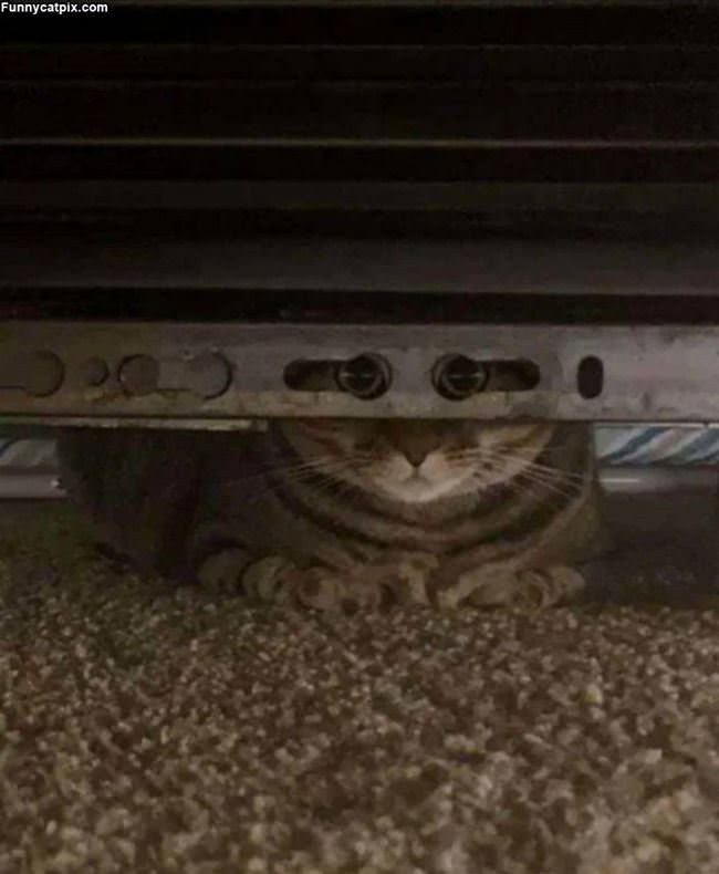 Peaking Out At You