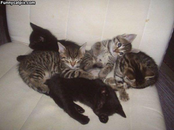 Pile Of Kitties