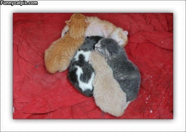 Pile Of Sleeping Kittens