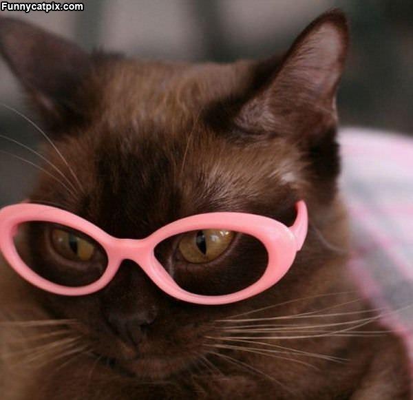 Pink Glasses Cat