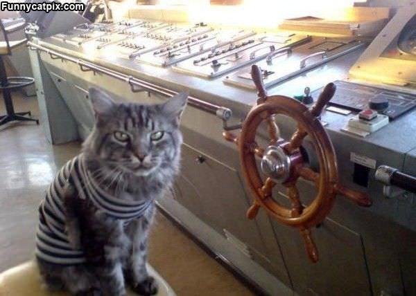 Pirate Cat Yarr