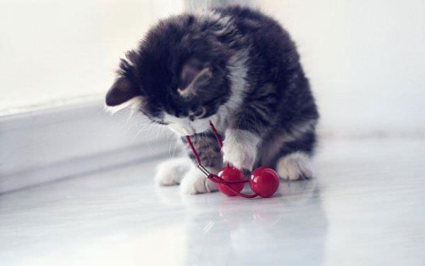 http://www.funnycatpix.com/_pics/Playing.jpg