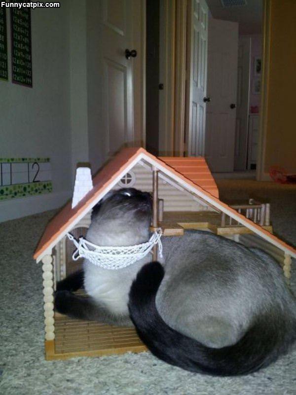 我未来宝宝的房子 - 雪山 - .