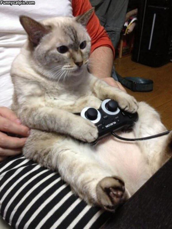 Playing Some Video Games