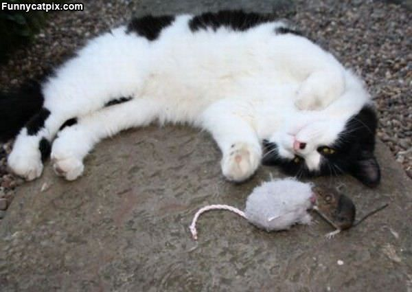 Playing With Mousy