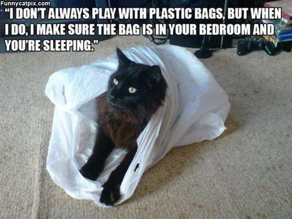 Playing With Plastic Bags