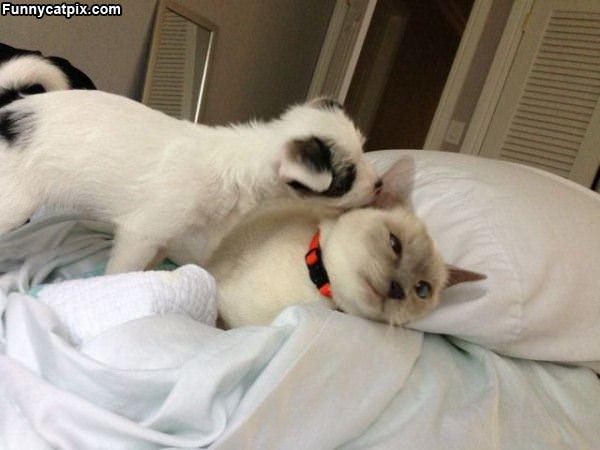 我说你们猫咪是最懒惰的 - 雪山 - .