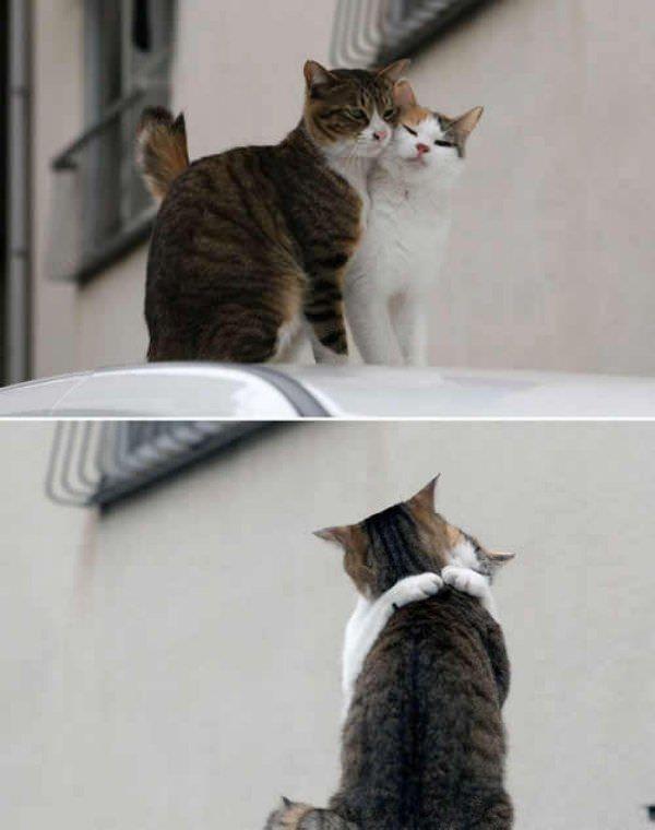 亲爱的 抱一抱 - 雪山 - .