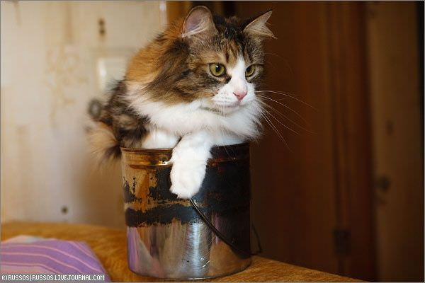 Pot Of Cat