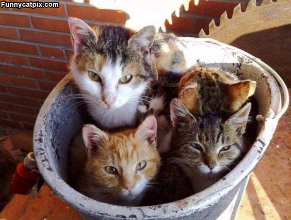 Pot Of Cats