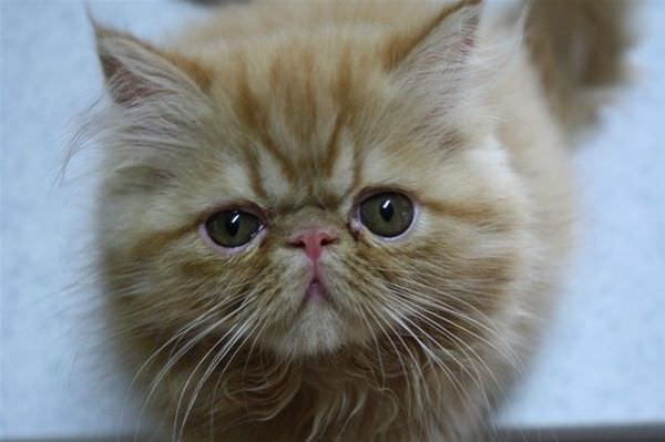 Pouty Face Cat