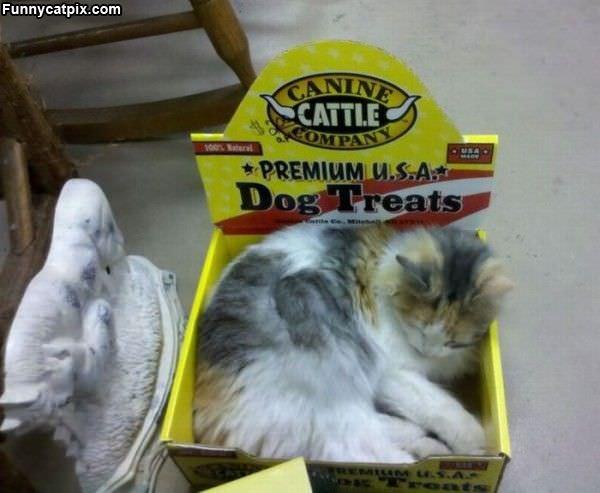 Premium Dog Treats