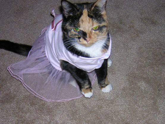 princess cat is not happy