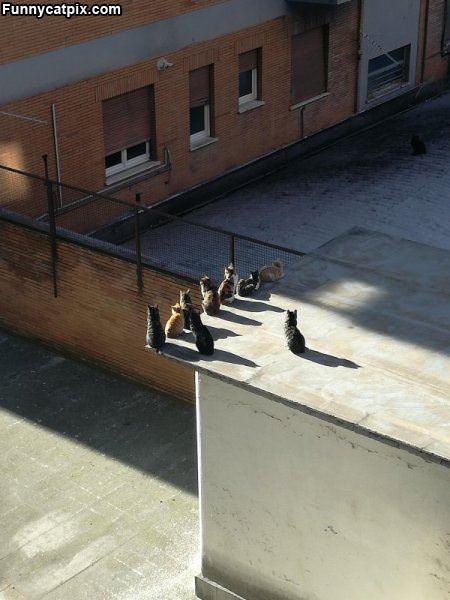 Private Cat Meeting