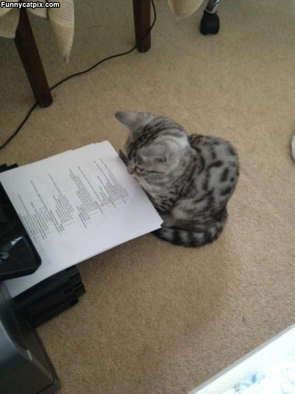 Proof Reader Cat