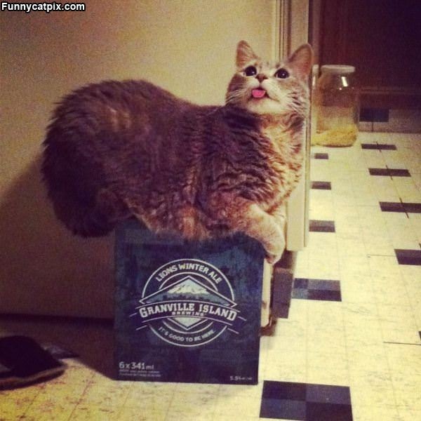 这箱不能再喝 - 雪山 - .