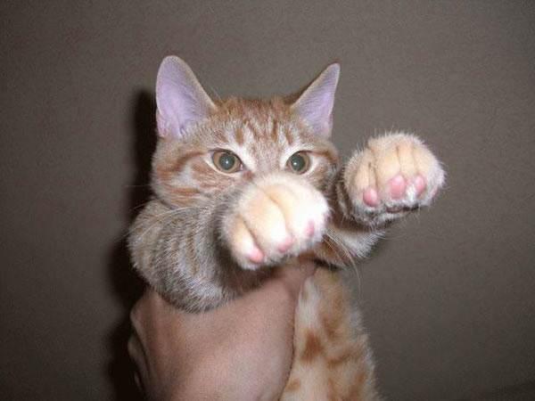 Punching Cat