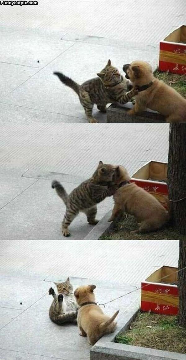 Puppy Vs Kitten War