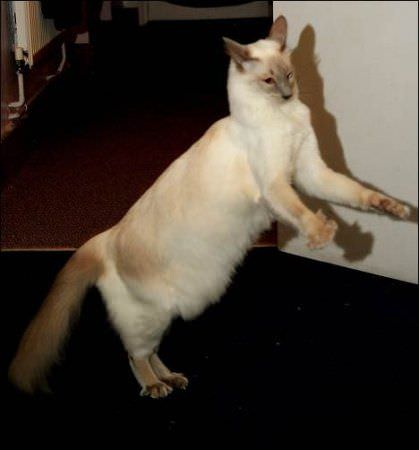 Pushing Things Around Cat