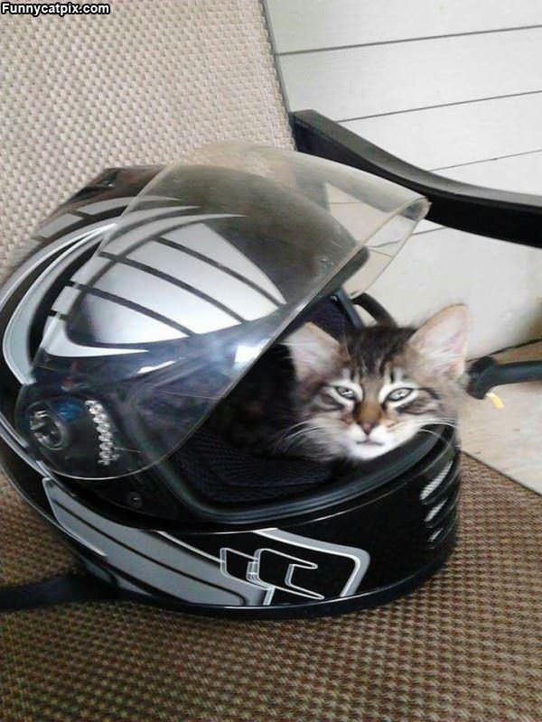 Race Cat