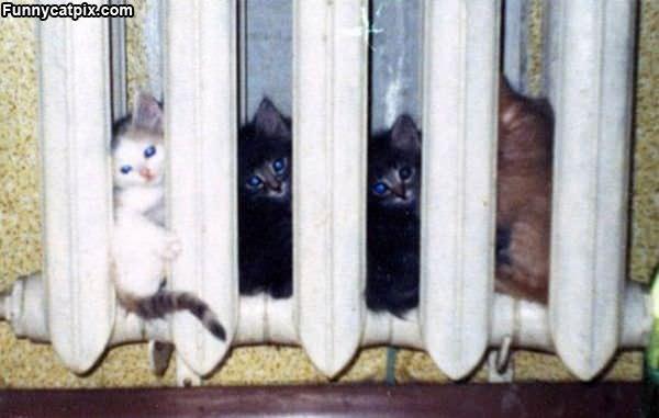 Radiator Kittens