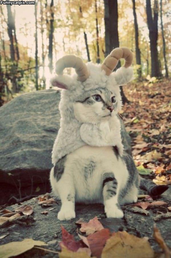 Ram Cats