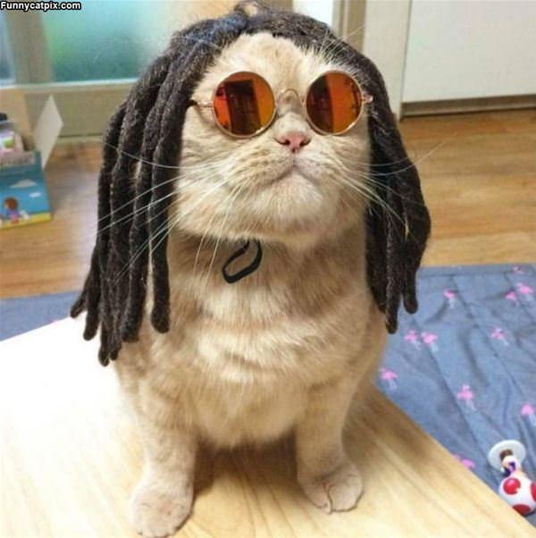 Rasta Cat