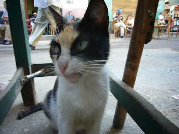 Rawrrr Cat
