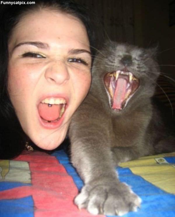 Rawrrr This Is My Cat