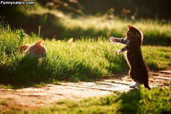 Rawrrrrr Zombi Kitten