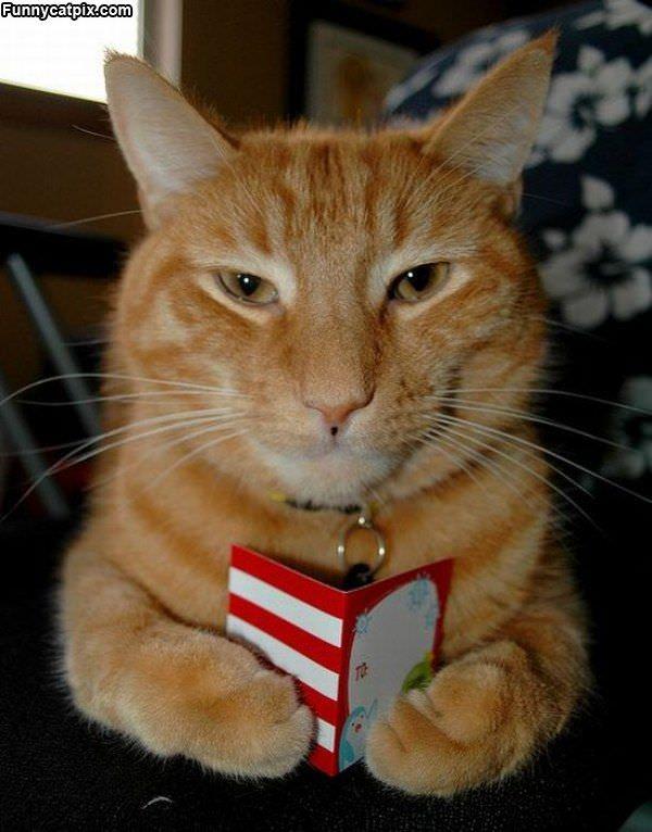 Reading My Card