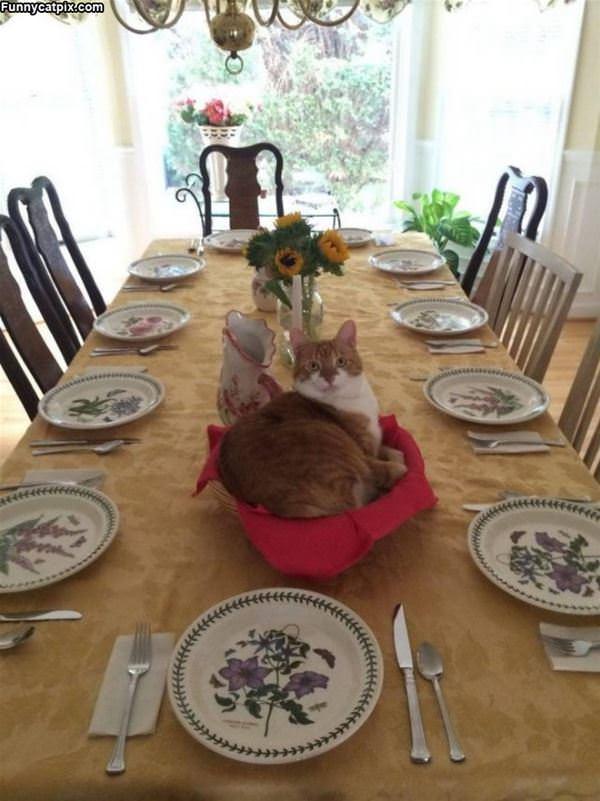 Ready For Dinner