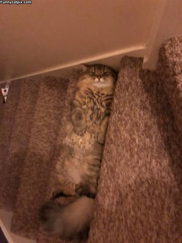 Relaxing On The Stairs