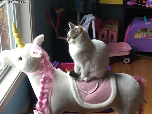 Riding My Unicorn