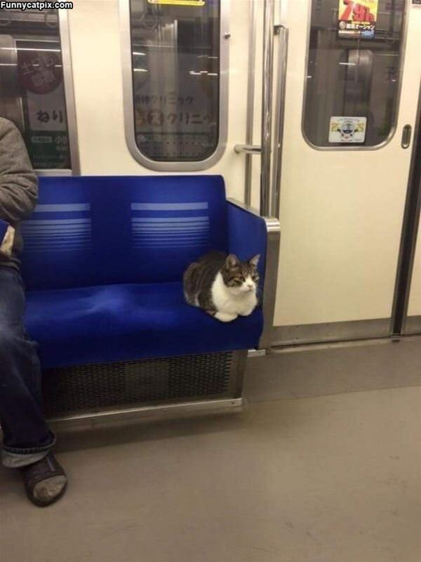 Riding The Train