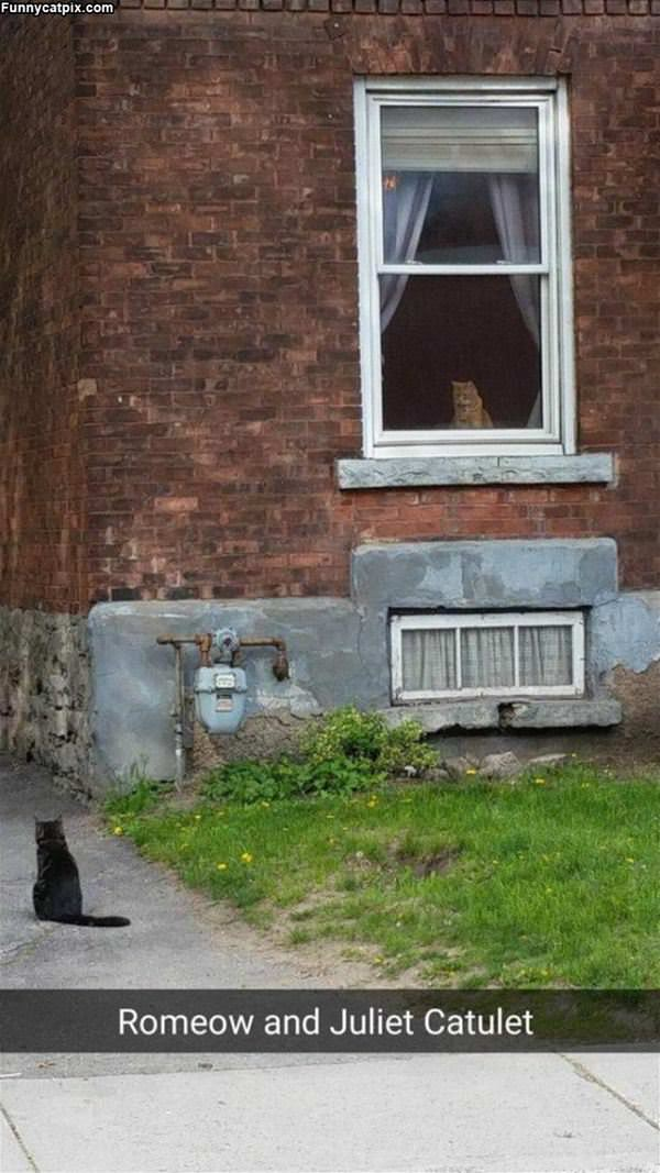 Romeo And Juliet Cat