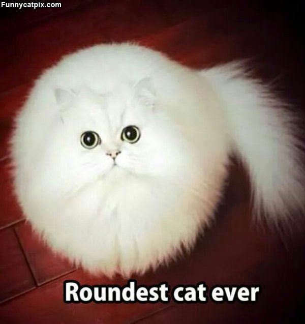 世界最圆的猫 - 雪山 - .