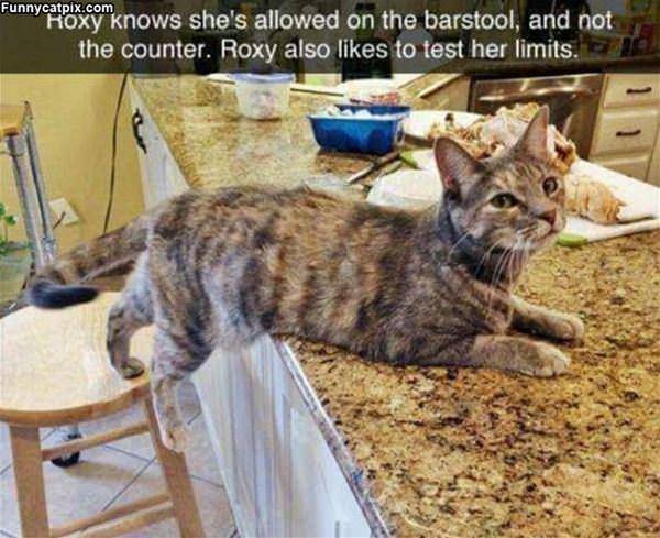 Roxy Knows