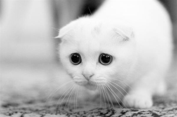 Sad_Cat_Is_Sad156