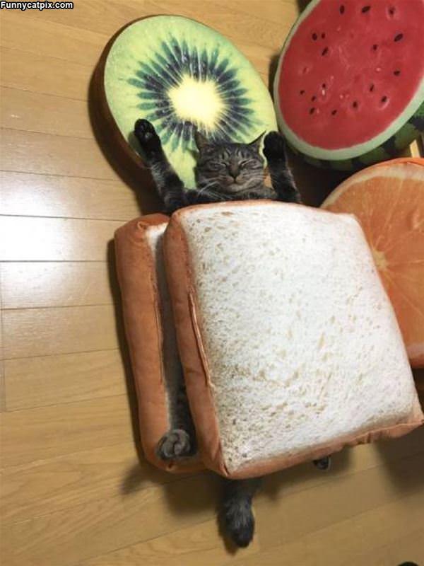 Sandwich Nap