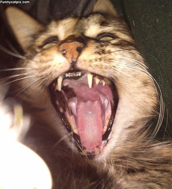 Sasha Laughing