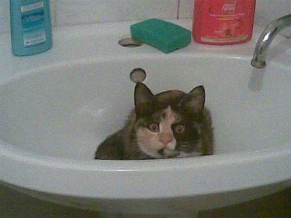 http://www.funnycatpix.com/_pics/Scared_In_The_Sink.jpg