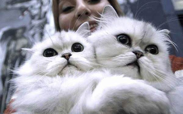 Scared White Cats