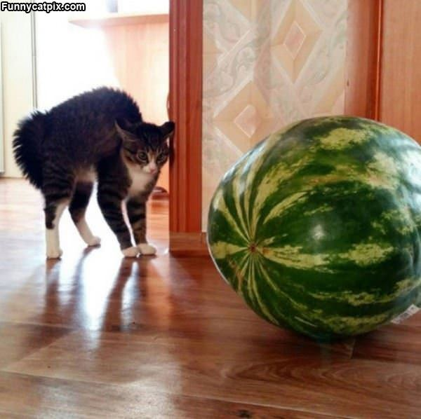 Scary Watermelon