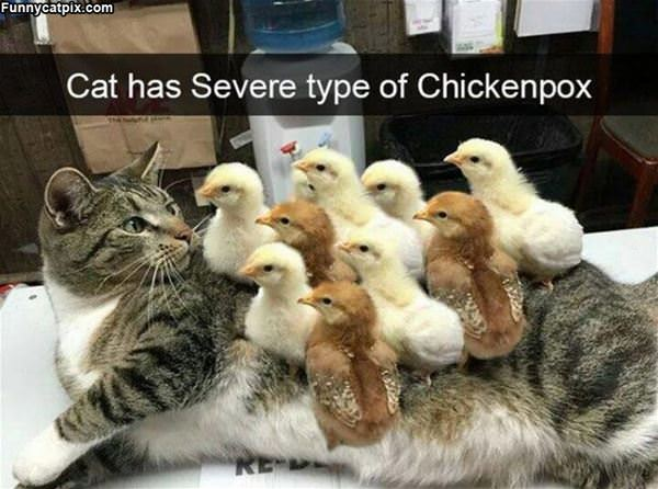 Severe Case Of Chicken Pox