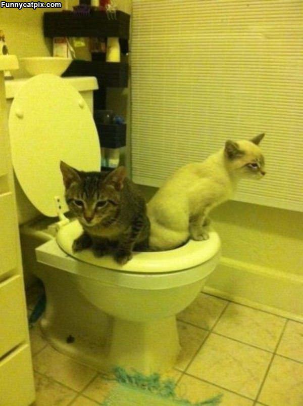公共厕所 - 雪山 - .