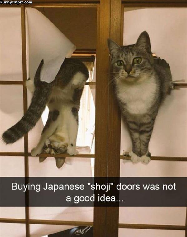 Shoki Doors With A Cat