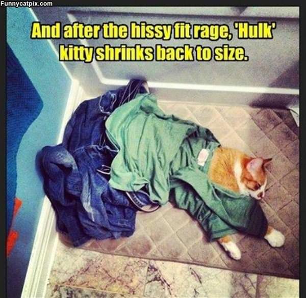 Shrinks Back To Size