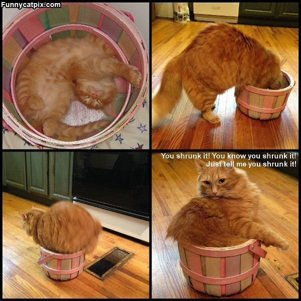 Shrunk My Basket