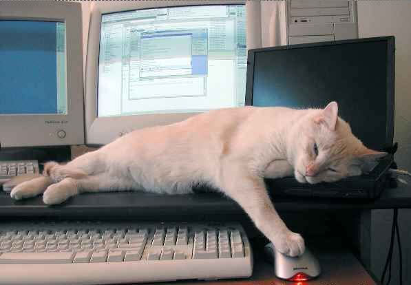 Sick Of Computer Today